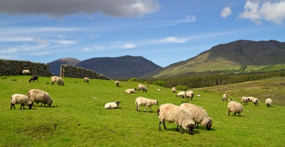 A Song of Ascents: Sheep grazing on a hill